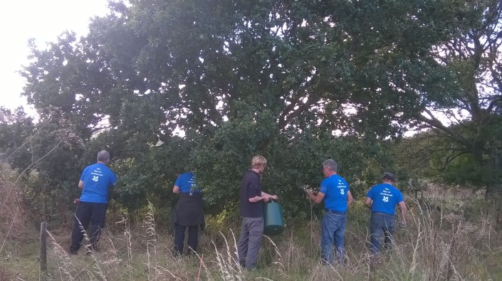 Searching for acorns with buckets at the ready